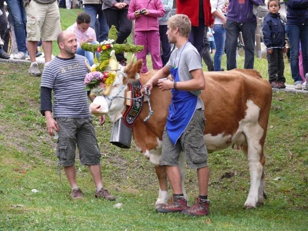 Desmalgada il rientro delle mucche dall'alpeggio estivo