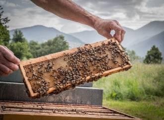Der Bienenzucht-Apicoltura Gocce d'oro - Giardino d'Erbe - G2