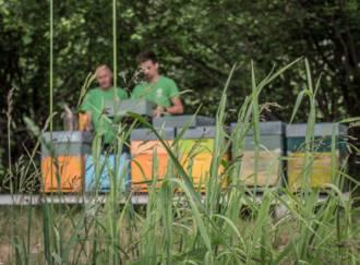 Der Bienenzucht-Apicoltura Gocce d'oro - Giardino d'Erbe - G4
